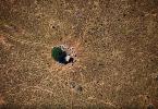 gado substitui floresta