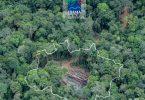 boletim Ibama desmatamento
