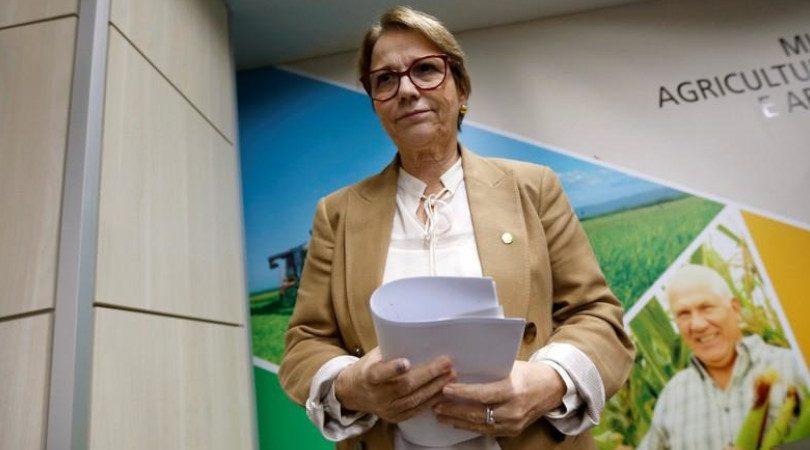 Tereza Cristina desmatamento