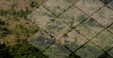 desmatamento hectares