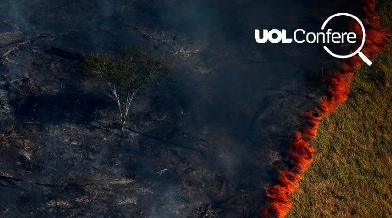 UOL desmatamento