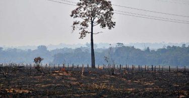 Mato Grosso madeira ilegal