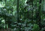 desmatamento chuvas