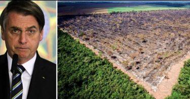 desmatamento recorde Bolsonaro