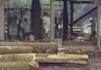 madeira ilegal Eduardo Bim