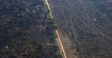 Mato Grosso desmatamento ilegal