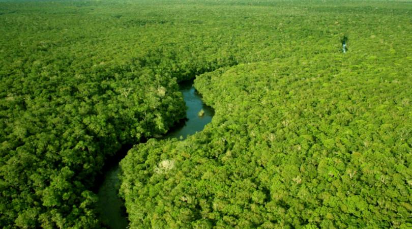 Merval Pereira amazônia