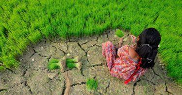 adaptação climática
