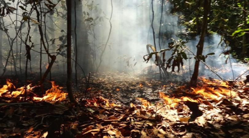 degradação florestal