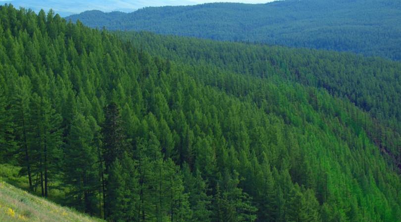 florestas tropicais carbono