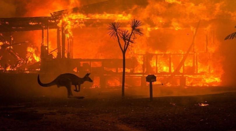 incendios das matas australianas