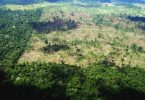 projeto de lei Política Nacional de Proteção do Bioma Amazônia