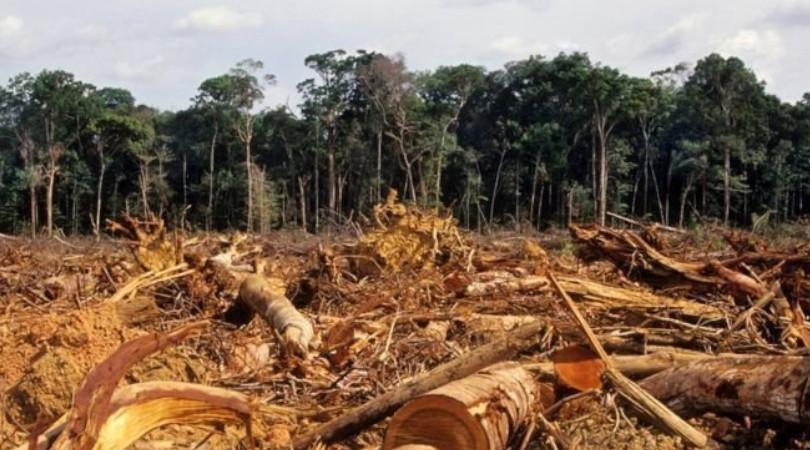 desmatamento e marcas globais