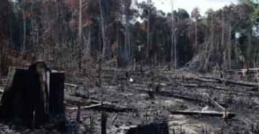 governança ambiental no Brasil
