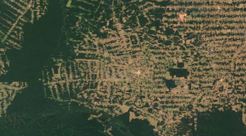 Floresta Amazônia fundo Amazônia