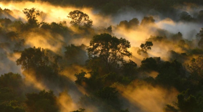 Floresta Amazônica CO2
