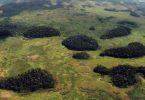 fragmentação florestal