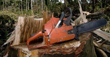 madeira ilegal