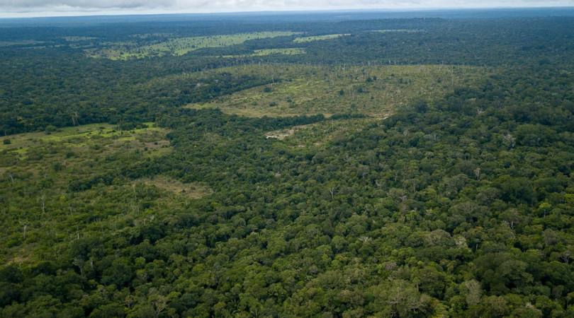 pandemia desmatamento