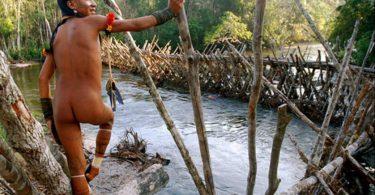 covid-19 indígenas quilombolas