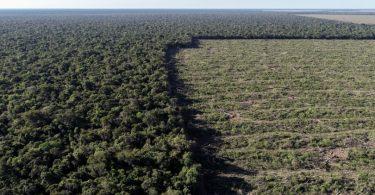 desmatamento Mato Grosso