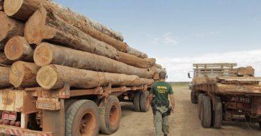 desmatamento forças armadas