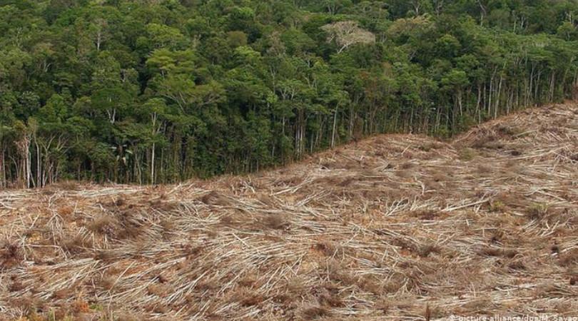 Bolsonaro meio ambiente