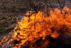 Sibéria incêndios