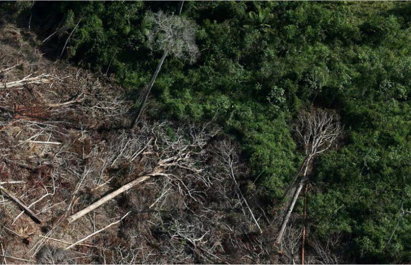 União Europeia desmatamento