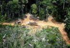 amazônia covid
