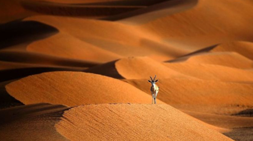 ano da biodiversidade