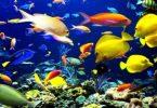 biodiversidade marinha