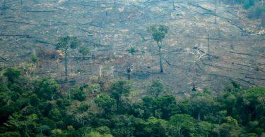 desmatamento Amazônia abril