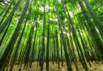investimentos verdes