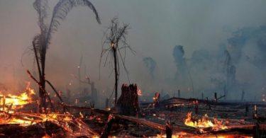 pandemia emissões brasil