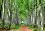 restauração Florestal