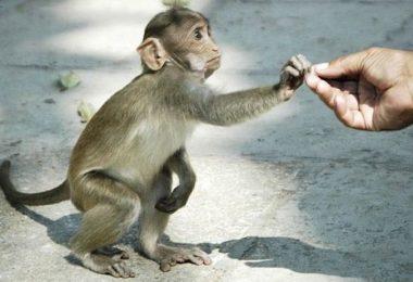 pandemias origem animal