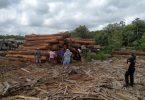 proteção desmatamento