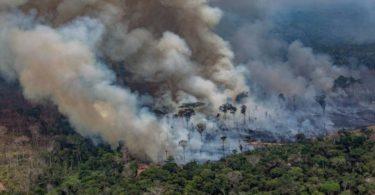 tragédia Amazônia