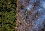 Amazônia mercado de carbono