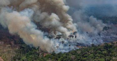 DETER desmatamento Amazônia junho 2020