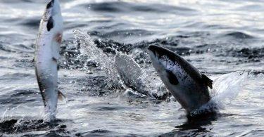 aquecimento global peixes