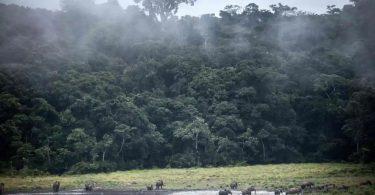florestas tropicais secas