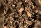 mudança do clima pequenos insetos