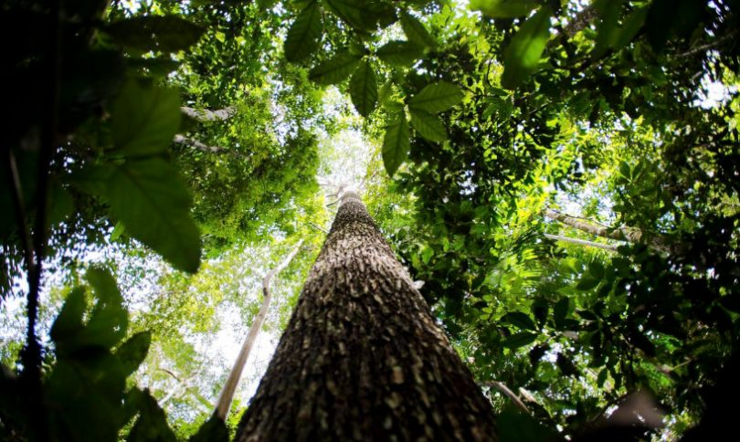 Amazônia pesquisa