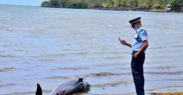 Ilhas maurício golfinhos