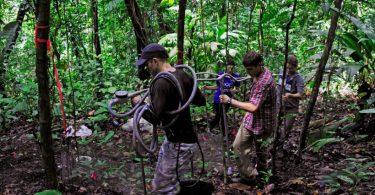 carbono solo florestas