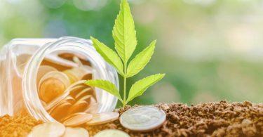 política e incentivos verdes