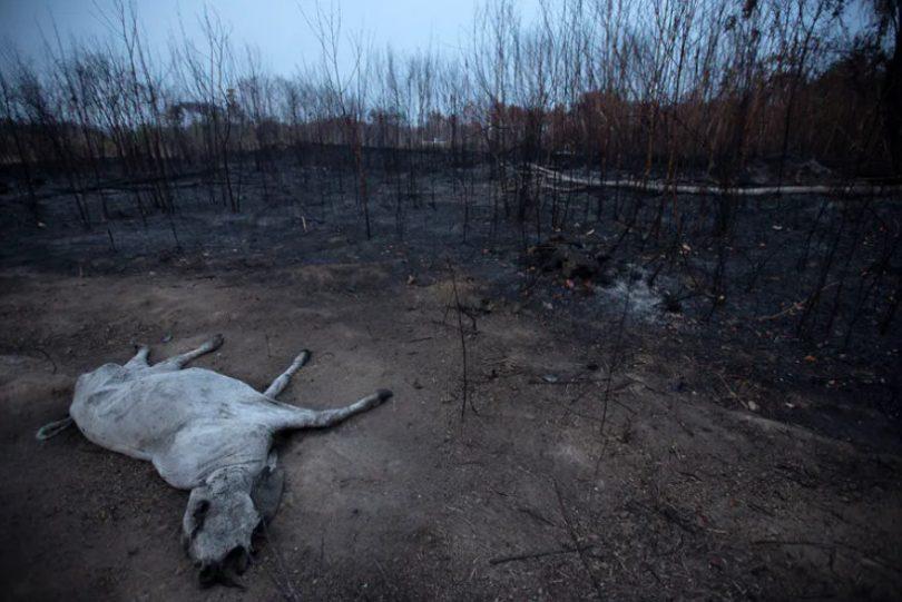 queimadas amazônia impactos