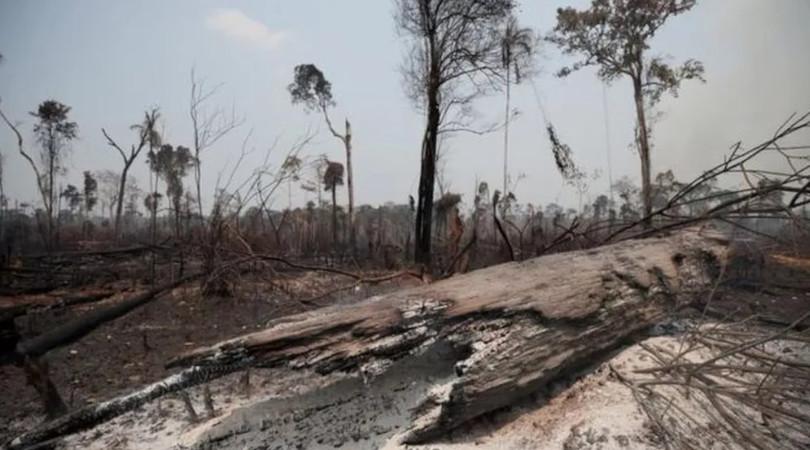 sociedade civil carta Amazônia